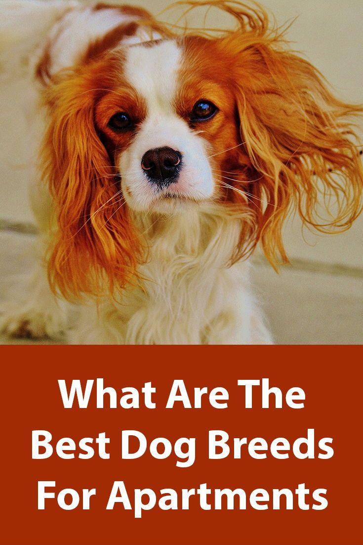 Best Dog Breeds For Apartments Dog Breeds Best Dog Breeds Dogs