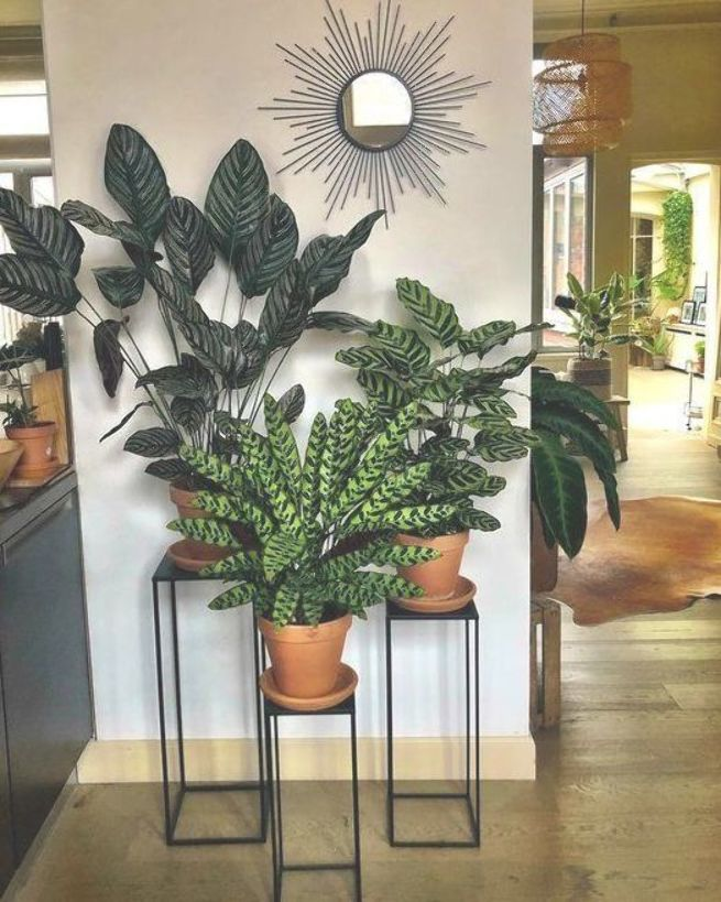Indoor Decorative Plants To Bring Freshness Indoor Plants Decor