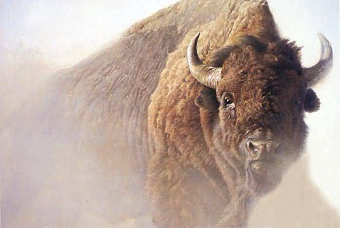 American Buffalo Chief