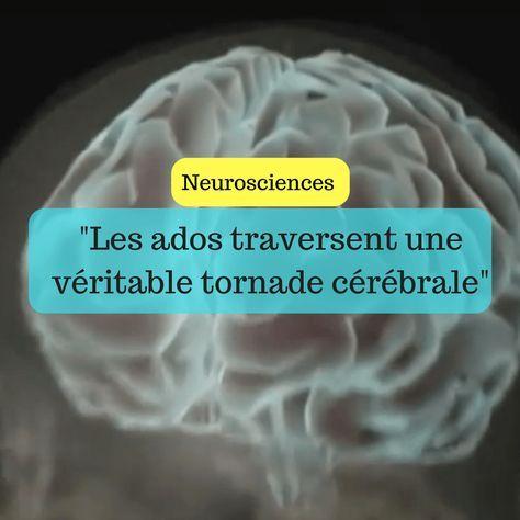 Le cerveau des ados traverse une véritable tornad…