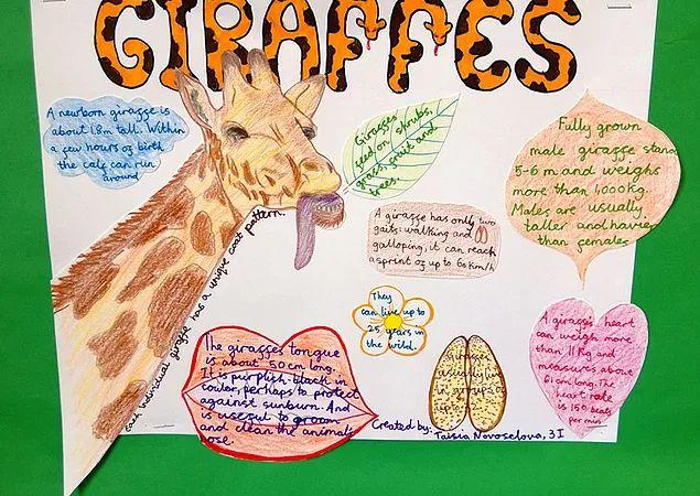 Animal facts - giraffes