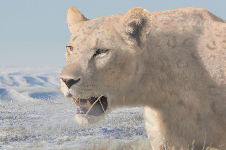 Panthera leo spelaea by jesusgamarra on DeviantArt