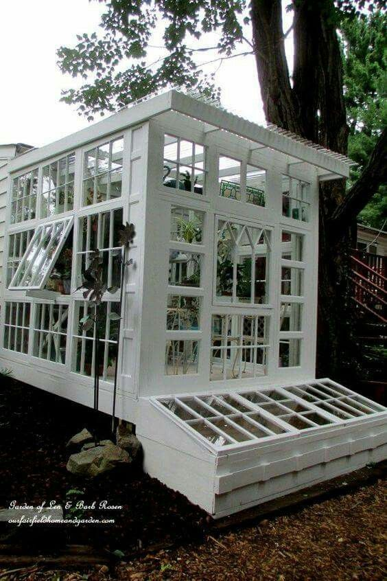 Love this greenhouse made from reclaimed windows for Reclaimed window greenhouse