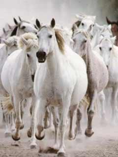7 White Horse Wallpaper For Mobile Allofthepicts Com