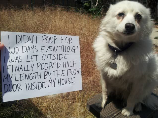 Halte Es In Border Collie Excited Pee Adolescent Dog Peeing In