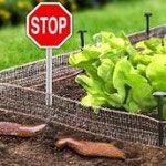 Speciale band van koper voor om de tuin om slakken weg te houden bij planten. Last van naaktslakken of huisjesslakken in de tuin of in de plantenbakken? Hier lees je de beste methoden om slakken op een natuurlijke biologische manier te bestrijden. Veilig voor kind en huisdier!