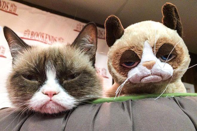 Presente de Natal para os fãs de memes – Grumpy Cat em 3 versoes de pelúcia http://www.bluebus.com.br/presente-de-natal-para-os-fas-de-memes-grumpy-cat-em-3-versoes-de-pelucia/