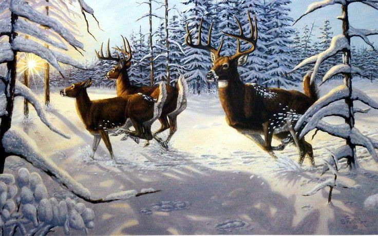 Artist Gene Stewart Unframed Whitetail Deer Print Winter Glory   WildlifePrints.com