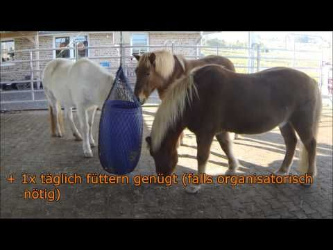 Geniale Pferdefütterung für Heu / Raufutter selber bauen   Pferdekommunikation.org - YouTube