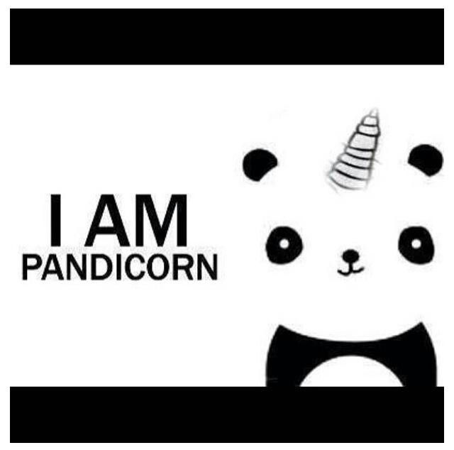 Pandicorn Drawings Illustrations Pinterest Pandas