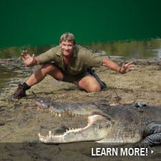 17 Best images about Steve Irwin - 11.0KB