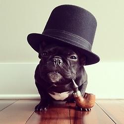 charlie: Like A Boss, Cowboys Hats, Funny Dogs, French Bulldogs, Like A Sir, Ten-Gallon Hats, Sherlock Holmes, Winston Churchill, Tops Hats
