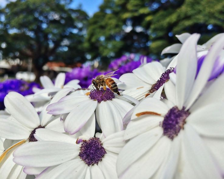 Bee On White And Purple Flower by Tomislav Vucic on 500px