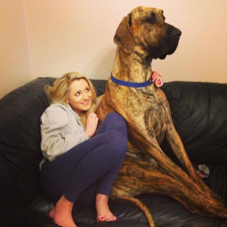 Cei mai mari câini din lume