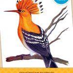 Лесные птицы — картинки, предназначены для приобретения детьми знаний по окружающему миру. Скачайте 18 картинок высокого качества и используйте в качестве визуального материала при занятиях. Дополнительные издания можно скачать тут.