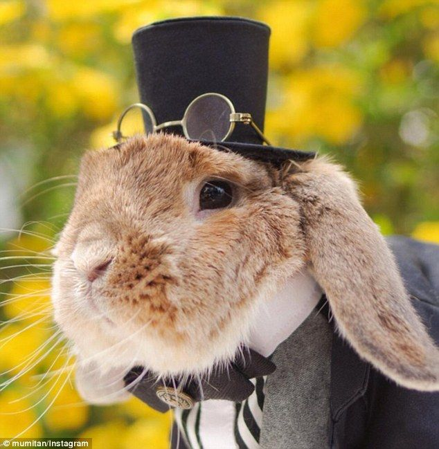 Stylish bunny: While Insta-famous dogs and cats are commonplace on social media, one very stylish rabbit is now making a name for himself