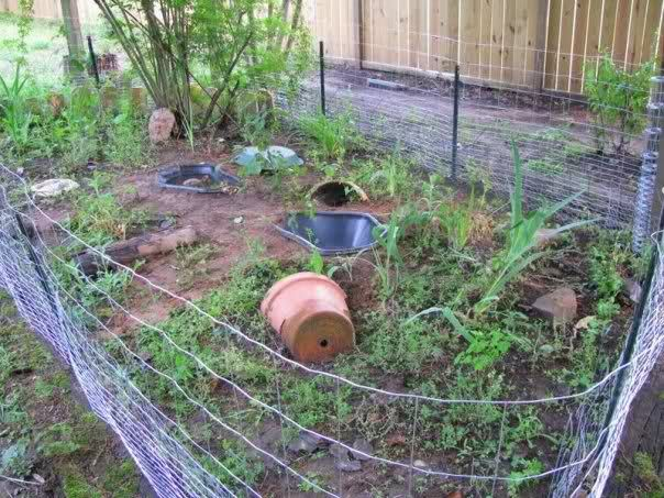 photos of building a pet snapping turtles homes | Here is what my turtle area looks like. This was last year. I've ...