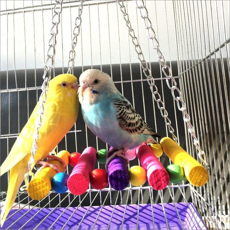 High Quality Pet Bird Parrot Standing Rope Cage Swing Perch Toy Climb Parrot Cage Toys Decorative Pet Parrot Bird Toys // FREE Shipping //     Get it here ---> https://thepetscastle.com/high-quality-pet-bird-parrot-standing-rope-cage-swing-perch-toy-climb-parrot-cage-toys-decorative-pet-parrot-bird-toys/    #lovecats #lovepuppies #lovekittens #furry #eyes #dogsitting