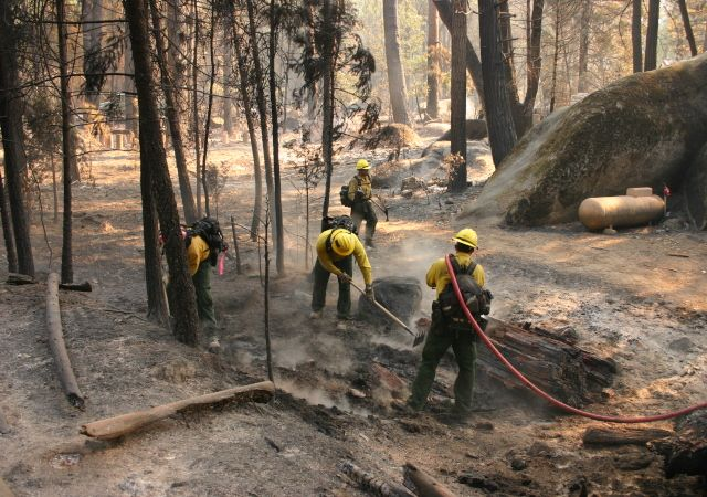 A new report on this year's Rim Fire in and around Yosemite National Park estimates that damage to the ecosystem may have cost as much as $8...