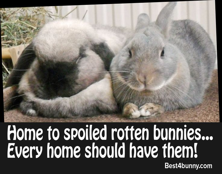 Every home should have spoiled rotten bunnies! http://best4bunny.com/