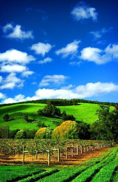 Wine country - Nannup Hills, Western Australia.