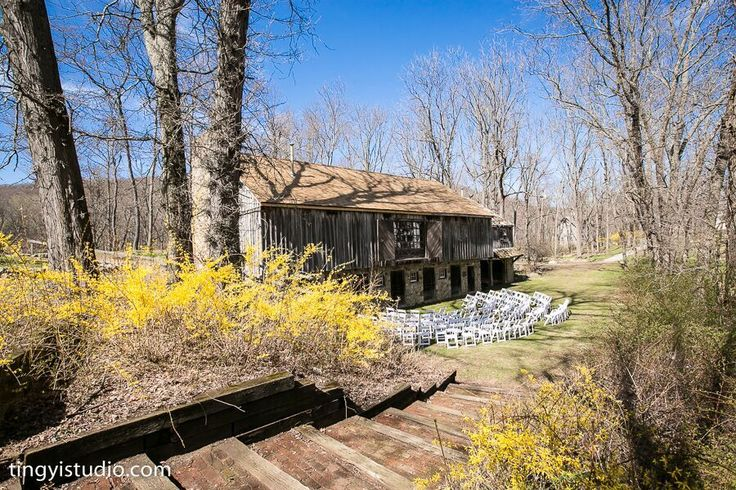 Early April in front of the circa 1800's stables with Forsythia in bloom .