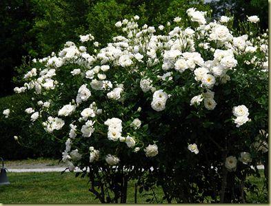5 flowering plants for a northern Utah garden