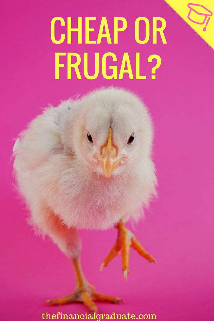 Are you riding the line between cheap and frugal? Find out what you really are once and for all!