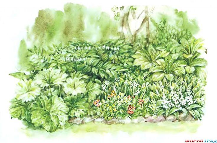 Схемы цветников в тени. Используемые растения: 1. Ландыш майский  2. Ландыш майский 3. Ландыш майский 4. Ландыш майский 5. Пельтифиллум щитовидный— Peltiphyllum peltatum. 6. Туя западная— Thuja occidentalis 'Danica'. 7. Роджерсия конскокаштанолистная— Rodgersia aesculifolia. 8. Зигаденус изящный— Zigadenus elegans. 9. Купена многоцветковая— Polygonatum multiflorum. 10. Примула обыкновенная (сорта) — Primula vulgaris.