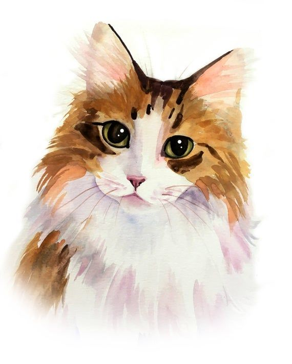 49++ Cat custom info