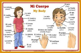 15 minutes spanish : Parts of human body