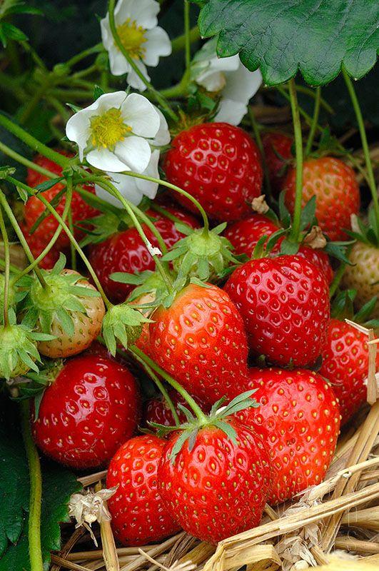 les 74 meilleures images du tableau la saison des fraises et framboises sur pinterest. Black Bedroom Furniture Sets. Home Design Ideas