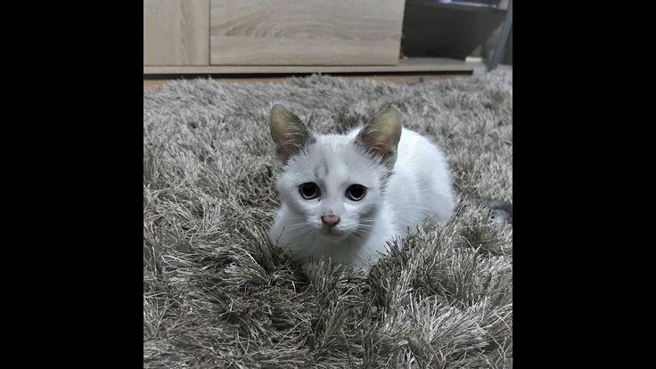 RT @pablo2_pablito: Pablo https://t.co/JnzjofOyUG via @YouTube #cat #cute #pet #love