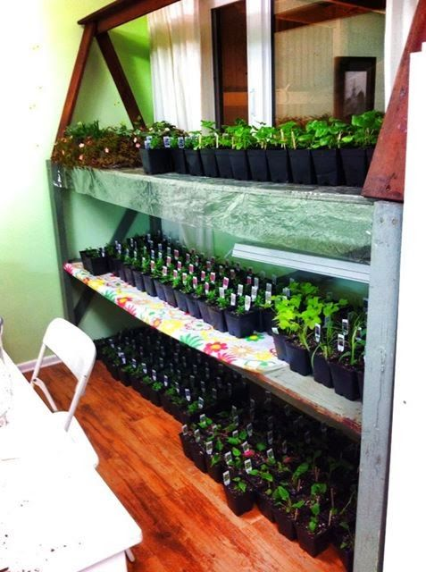 http://www.alifeofwhimsey.com a diy  plant shelf. Great to start plants indoors