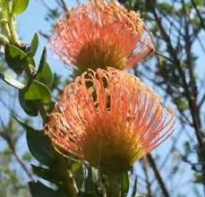 Resultado de imagen de Buscar paisajes de flores de south african