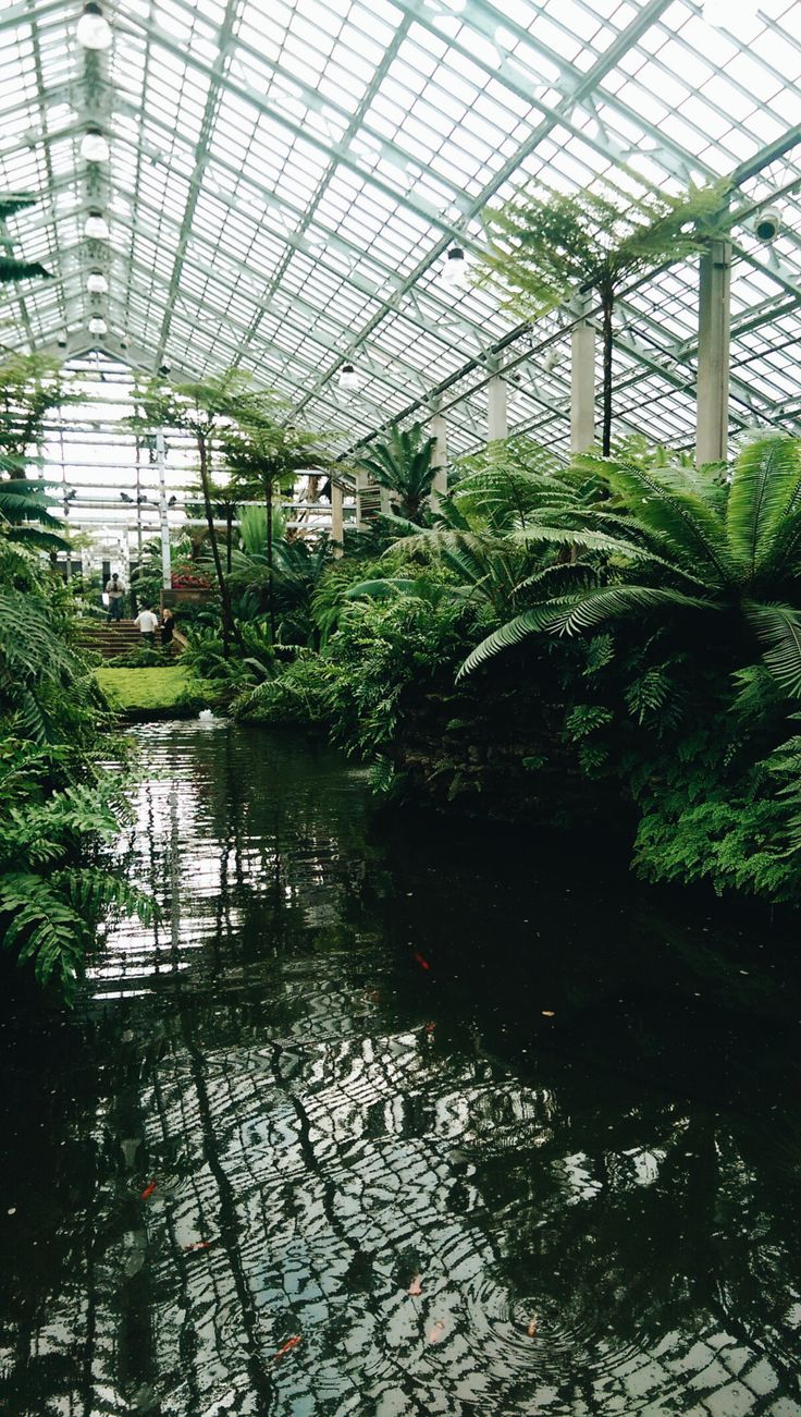 rainy days in Chicago - Garfield Park Conservatory