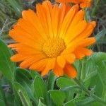 Kwiaty, które możesz dodać do potraw więcej na http://www.sposobnawszystko.pl/jadalne-kwiaty-z-ogrodka/