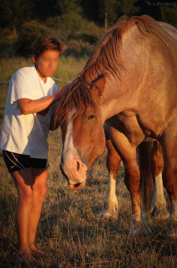 Les 176 meilleures images du tableau le cheval et le for Exterieur oreille qui gratte