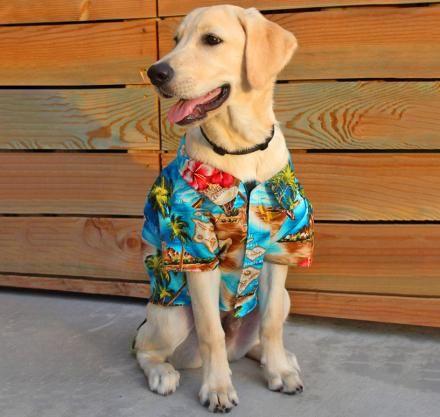 Unique Pet Products Unique Dog Toys And Dog Bowls Large Dog
