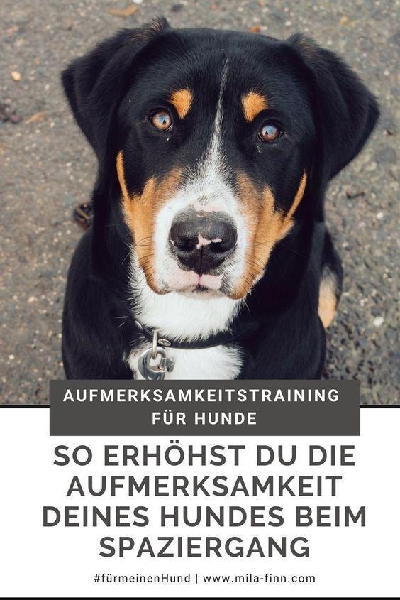 Mit Diesen Tipps Erhohst Du Die Aufmerksamkeit Deines Hundes Hunde Hunde Erziehen Und Gesunde Hunde