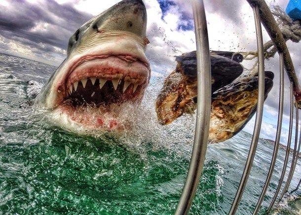 Ce gros plan effrayant d'un requin blanc inquiète les défenseurs du squale
