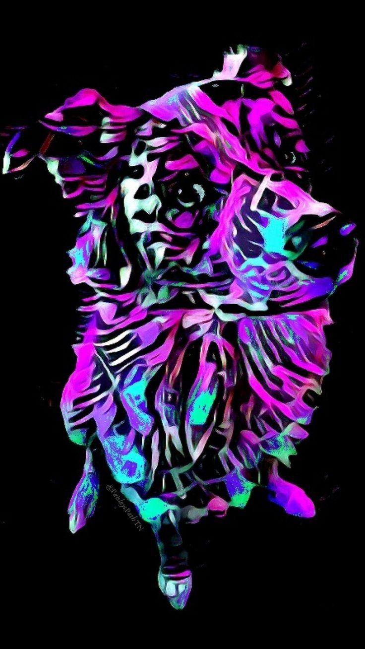 Australian Shepherd Digital Art digitalart petart