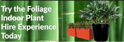 Foliage hire indoor plant is ideal choice for your office plants need. With us you will get number of different types of plants and pots that suits best in your office environment.