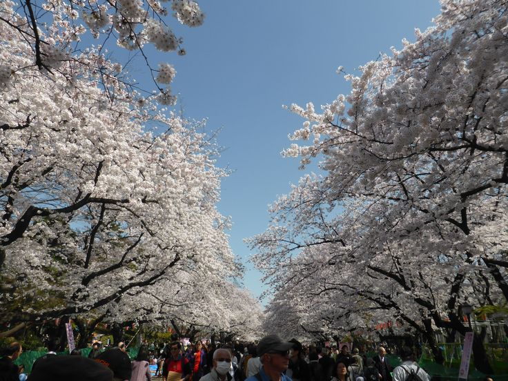Tokyo, last day of March 2015