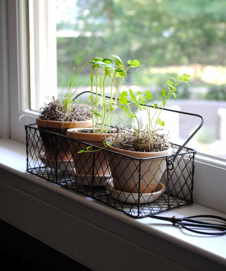 30 Best Images About Kitchen Gardening On Pinterest: 102 Best Kitchen Herb Garden Images On Pinterest