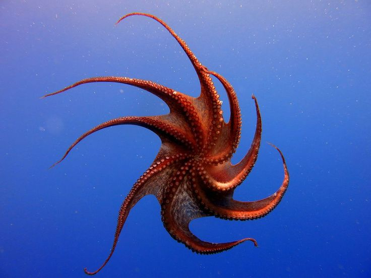 Octopus Photo by aydin tanal — National Geographic Your Shot