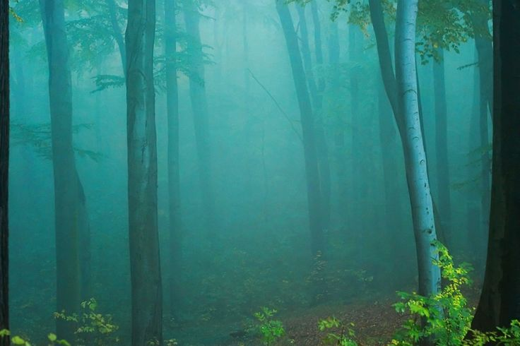 Forests: Mysterious Forest Blue Trees Mist Woods HD Wallpapers for High Resolution HD 16:9 WQHD QWXGA 1080p 900p 720p QHD nHD Standard 4:3 5:4 Fullscreen UXGA XGA SVGA QSXGA SXGA Wide 16:10 5:3 Widescreen WHXGA WQXGA WUXGA WXGA WGA 3:2 DVGA HVGA HQVGA devices Apple PowerBook G4 iPhone 4 3G 3GS iPod Touch Mobile VGA WVGA iPad PSP Phone QVGA Smartphone PocketPC GPS Zune BlackBerry HTC Samsung LG Nokia Eten Asus WQVGA Sony Ericsson Vertu MIO Zen Tablet Android 7001
