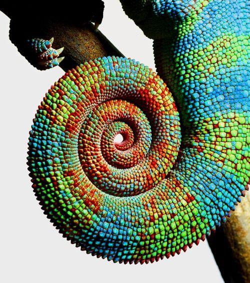 Mark Laita - Reptiles (2011)