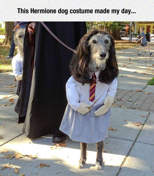 She Is Definitely Going To Dogwarts<<<<repinning for the pun!!!!