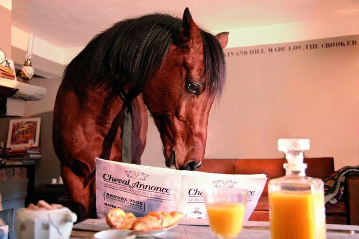 """Petit Dej d'un cheval devant son """"Cheval Annonce"""" ! #cheval #petitdej"""